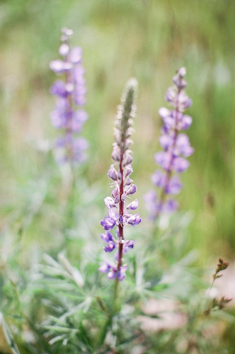 purple-flower-wedding