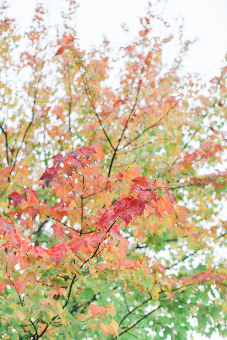 fall-leaves-engagment-pictures-kelowna