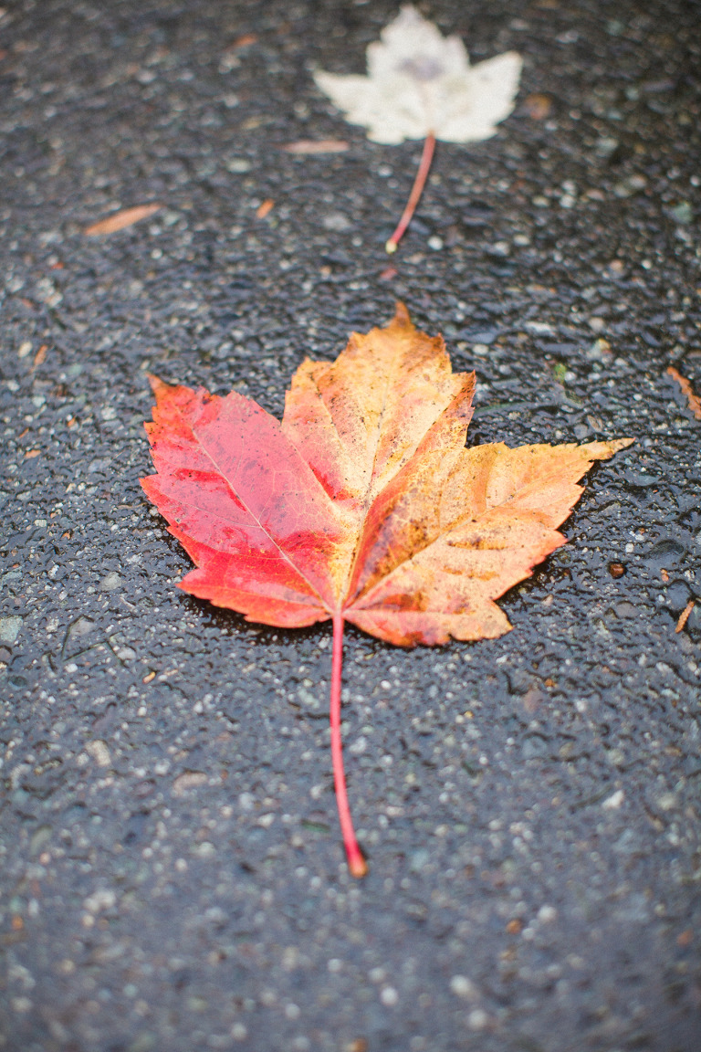 vancouver-fall-leaves-engagement-pictures